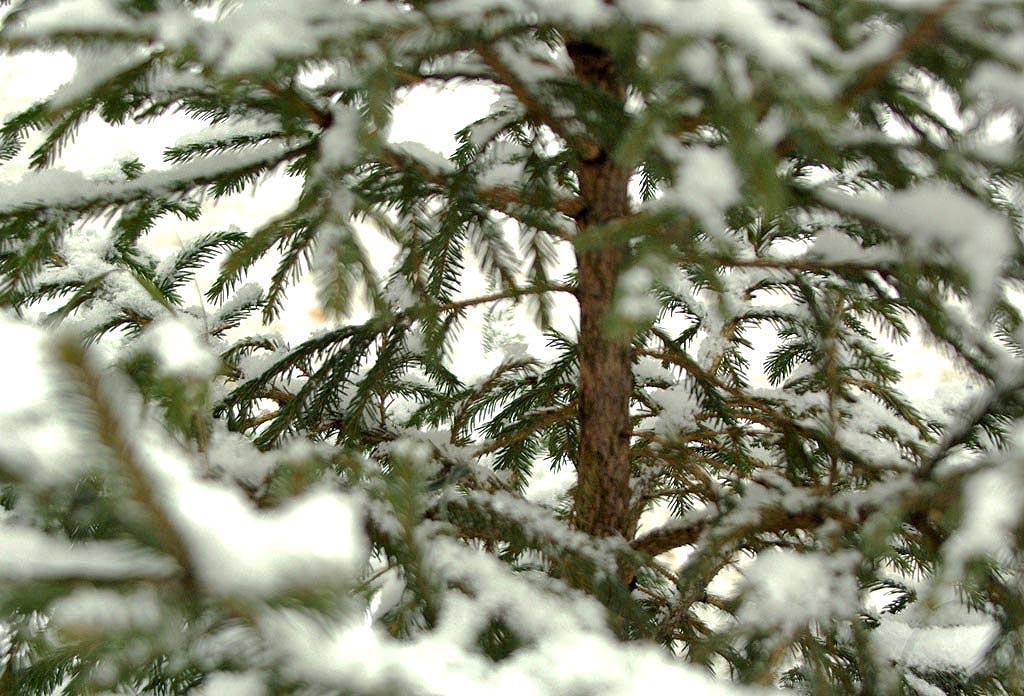 В преддверии новогодних праздников главное управление лесами Челябинской области и его п