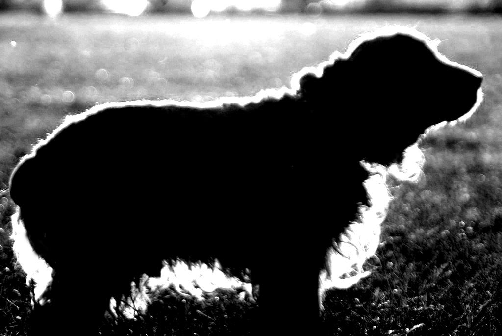 В Златоусте (Челябинская область) коммунальщики убивали бездомных животных на глазах у горожан. Х