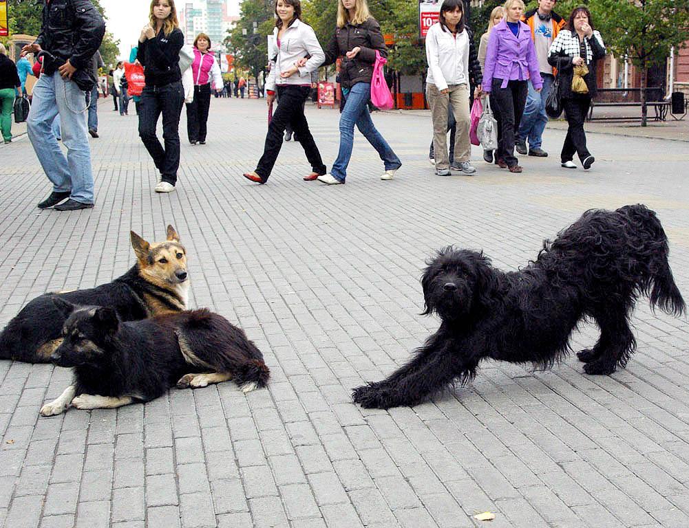 В начале декабря представители рабочей группы по проблемам бездомных животных Общественной палаты