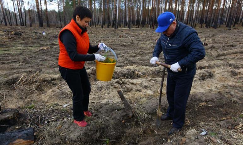 В Челябинской области дан старт международной акции «Сад памяти» - в Кыштыме высадили более 12 ты