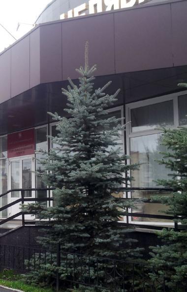 Заместителем министра социальных отношений Челябинской области назначена Любовь Истомина.