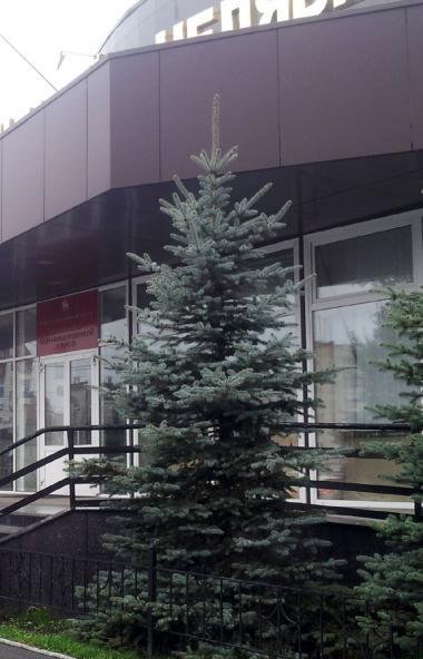 Заместитель министра социальных отношений Челябинской областиТатьяна Шин покидает занимаемы