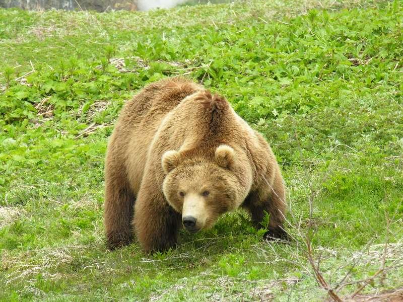 Депутат фракции «Яблоко» Александр Кобринский напомнил, что по ветеринарным правилам все дикие жи
