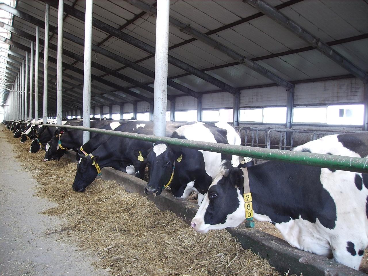Главное открытие недавно опубликованного списка ТОП-50 производителей сырого молока от аналити