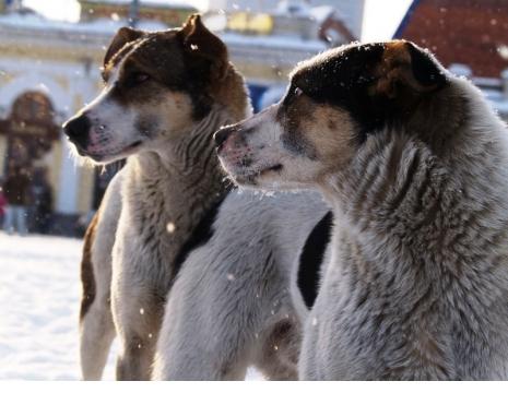 В Челябинске проведут новый аукцион по отлову безнадзорных животных. Заявки будут приниматься в т
