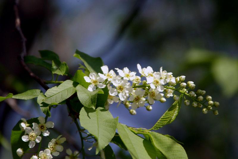 В прошлом году в Магнитогорске высажено 2613 деревьев - это на 34 проц