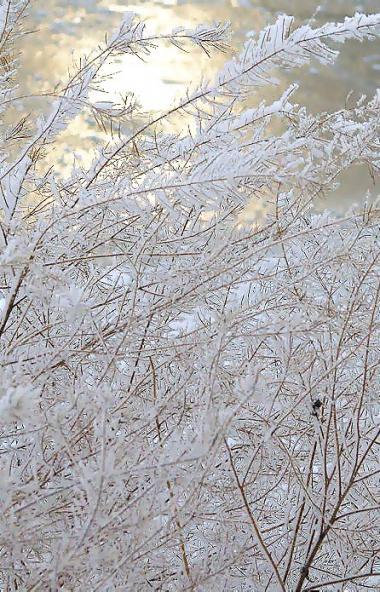 В четверг, 23 января, в Челябинской области ожидается облачная погода с прояснением, пройдет снег
