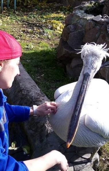 В пятницу, 4 октября, Челябинский зоопарк отметил Всемирный День животных. Этот праздник был учре