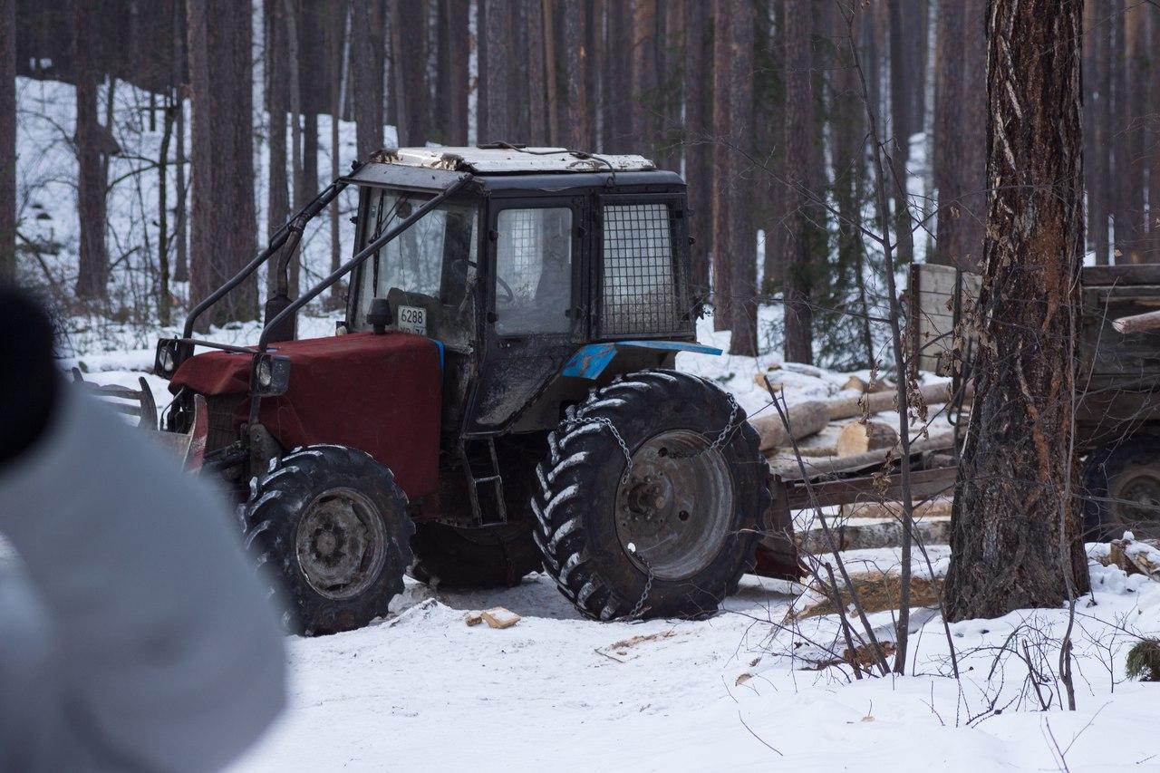 «На озере Тургояк ООО «МиассЛес» осуществлял плановые рубки в целях заготовки древесины. Арендато