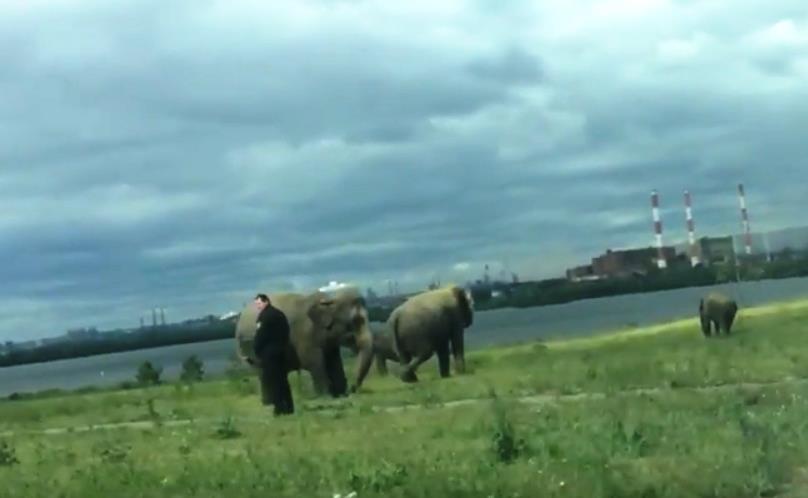 Как сообщили агентству «Урал-пресс-информ» в администрации Магнитогорска, слоны, верблюды и други