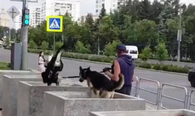Свято место пусто не бывает: пустующие каменные кадки на пересечении проспекта Ленина и улицы Вол
