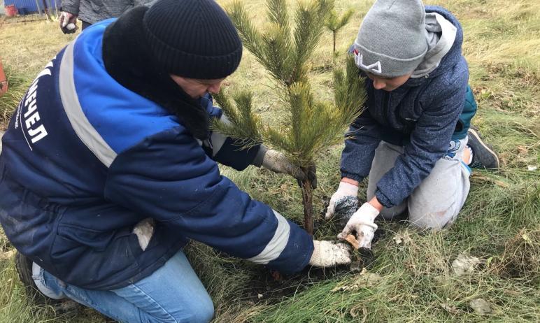 В Аргаяшском районе Челябинской области со свежевспаханного поля, да накануне заморозков люди все