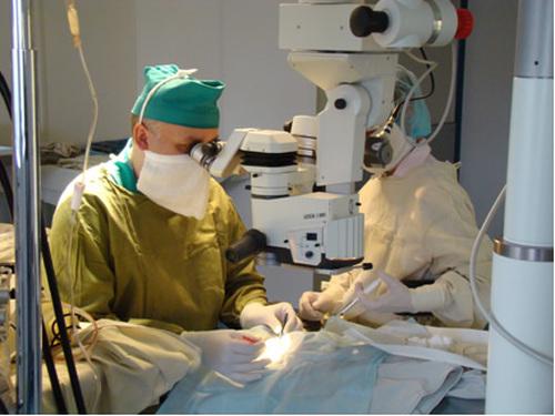 В конференции примут участие врачи офтальмологи Свердловской, Тюменской, Курганской, Оренбургско