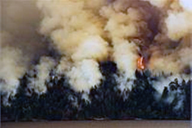 Три возгорания произошло в Карталинском (28,8 га) лесничестве и одно – в Брединском (8,7 га). На