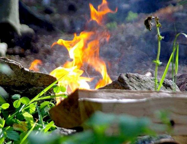 В лесах Челябинской области в минувшие майские праздники ликвидировано 73 пожара на общей площади