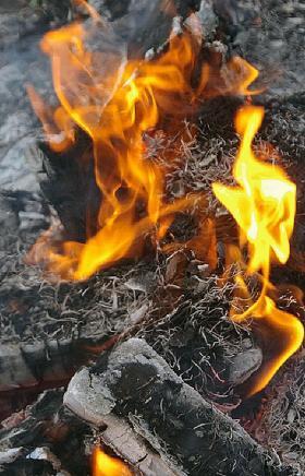 В Челябинской области за минувшие выходные горело 149 гектаров леса. Все пять пожаров были потуше