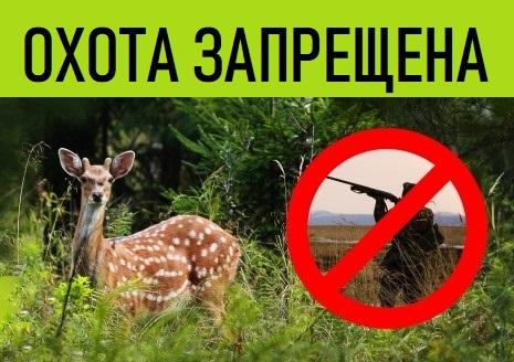 В Челябинской области в новом году браконьеры убили 23 сибирских косули и десять лосей, тогда как