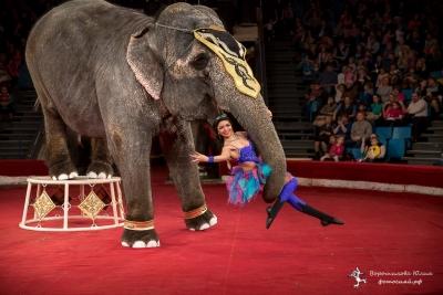 Сергей Гулевич, дрессировщик Варшавского цирка: У нас со слонами полное взаимопонимание