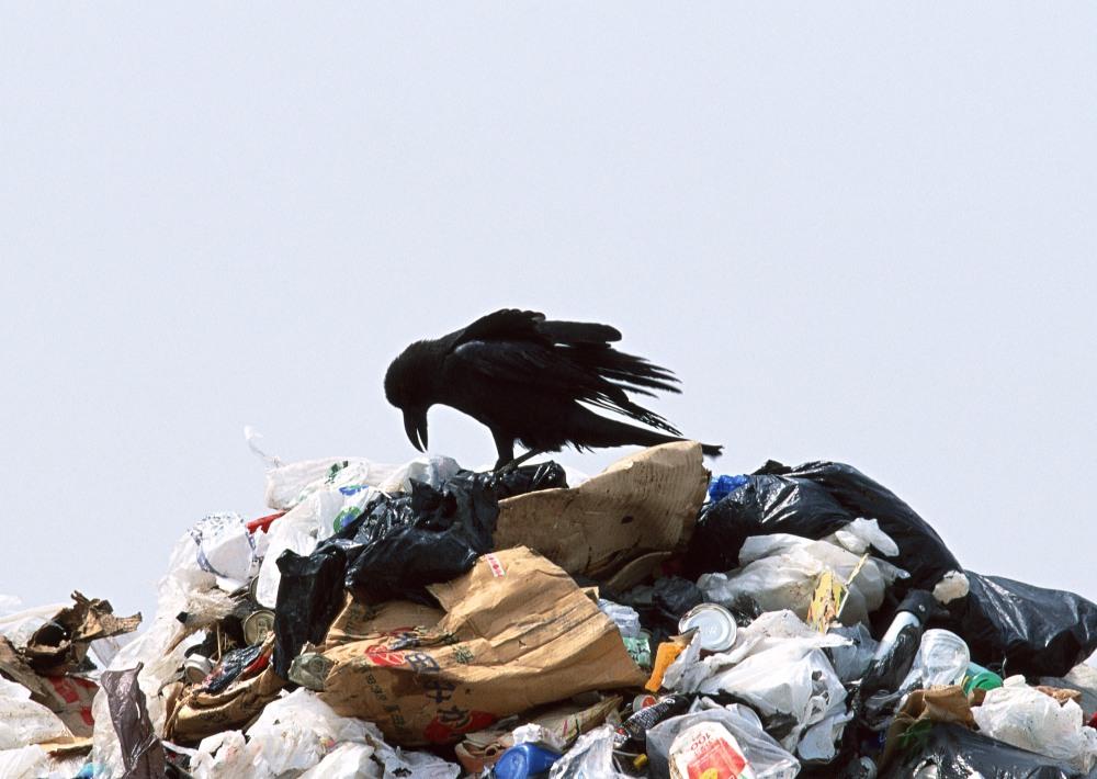Также городские власти определились и с местом размещения нового полигона бытовых отходов. Вероя