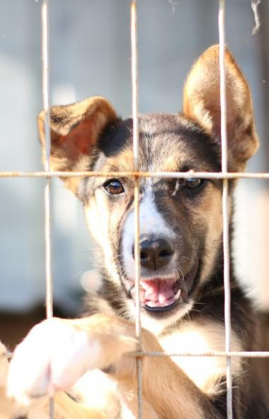 В Челябинске ищут исполнителей муниципальных контрактов на отлов и содержание безнадзорных животн