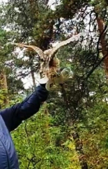 В Челябинском городском бору состоялся очередной выпуск животных и птиц, прошедших реабилитацию в