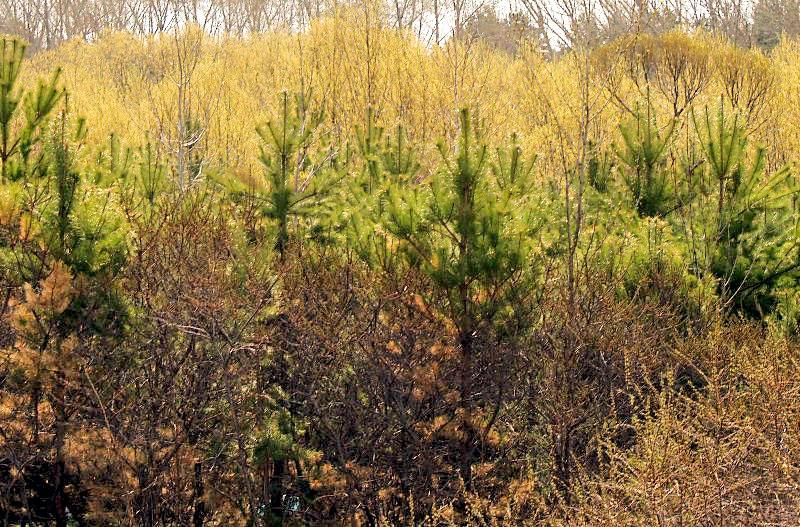 В Челябинской области продолжается посадка лесных культур. На сегодняшний день лесничествами Южно