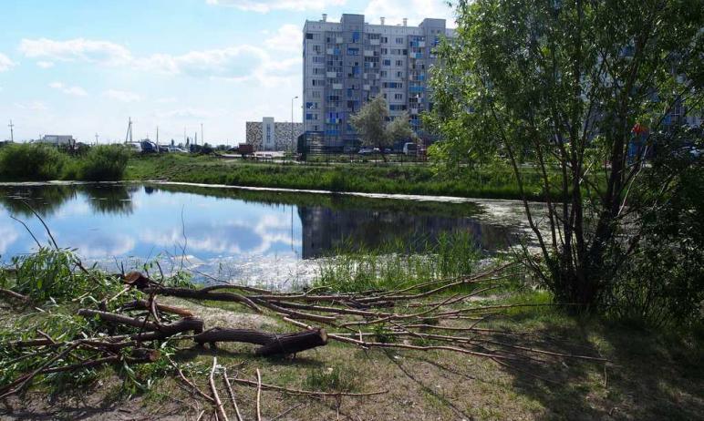 В челябинском микрорайоне Чурилово на берегу пруда построят сквер с газоном и новыми растениями: