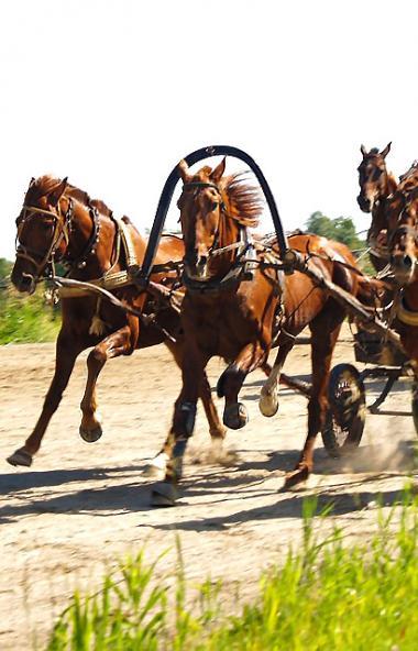 Две лошади, следовавшие из Нагайбакского района Челябинской области в город Рудный Костанайской о