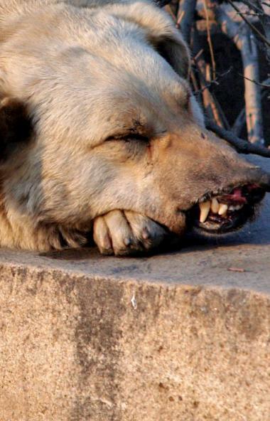 В Челябинской области пользователи соцсетей открыто предлагают свои услуги по убийству животных.