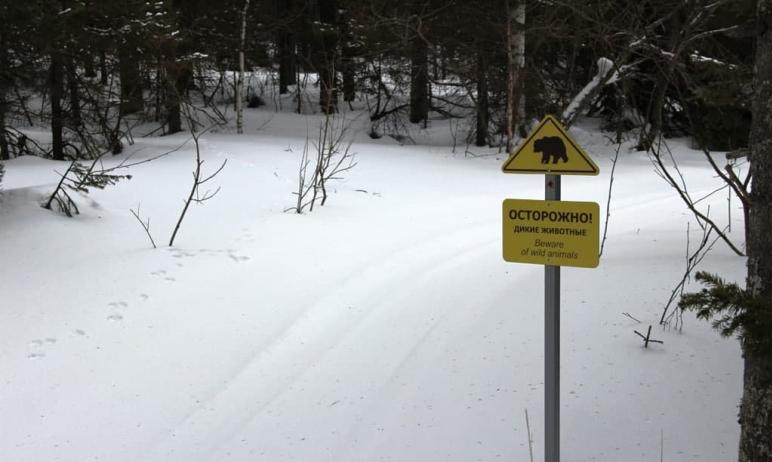 В Челябинской области в нацпарке «Таганай» обнаружили хаотичные заячьи тропы. Возможно, косые спе