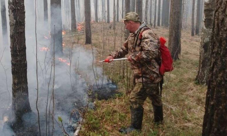 В Челябинской области в Месединском лесничестве вспыхнул пожар, который помогли потушить сотрудни