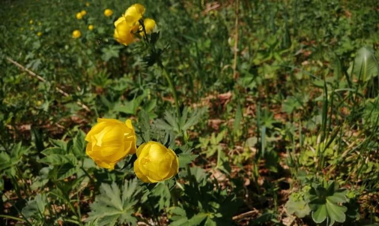 Сотрудники национального парка «Таганай» обратили внимание на сорванный букет лесных цветов, оста