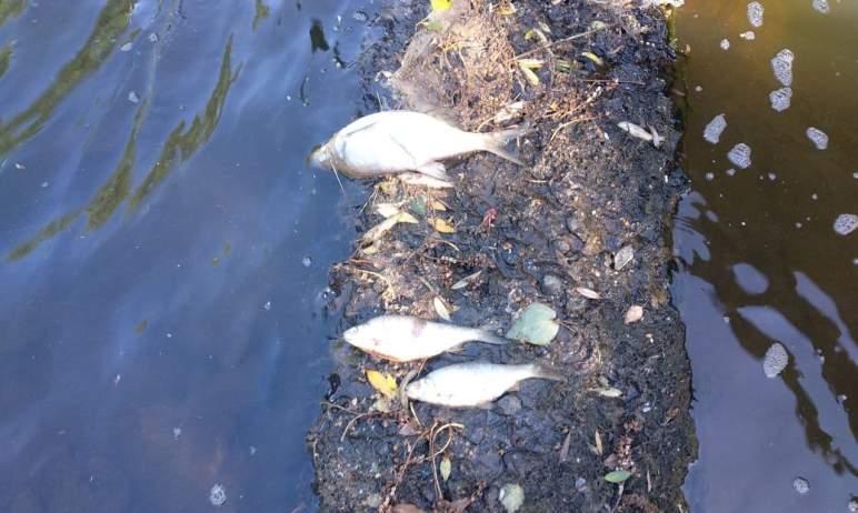 Рыбнадзор по Челябинской области объяснил массовый замор рыбы в реке Ай природными явлениями. С з