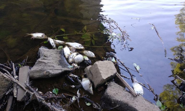 В Златоусте рыбак рассказал общественникам о массовом заморе рыбы. Замминистра экологии Челябинск