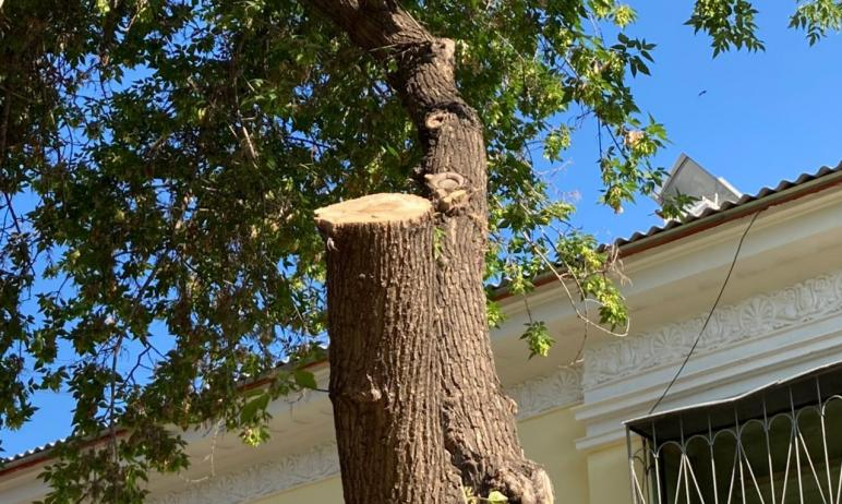 В Челябинске по факту рубки деревьев в центре города могут возбудить уголовное дело. Прокуратура