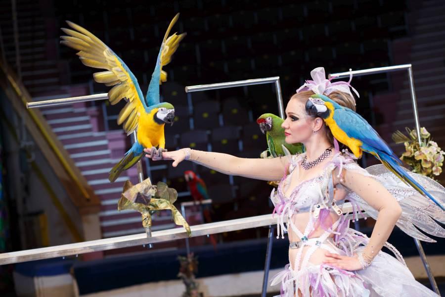 Еще не успела остынуть цирковая арена от жарких гиппопотамов из Африки, как в столицу Южного Урал