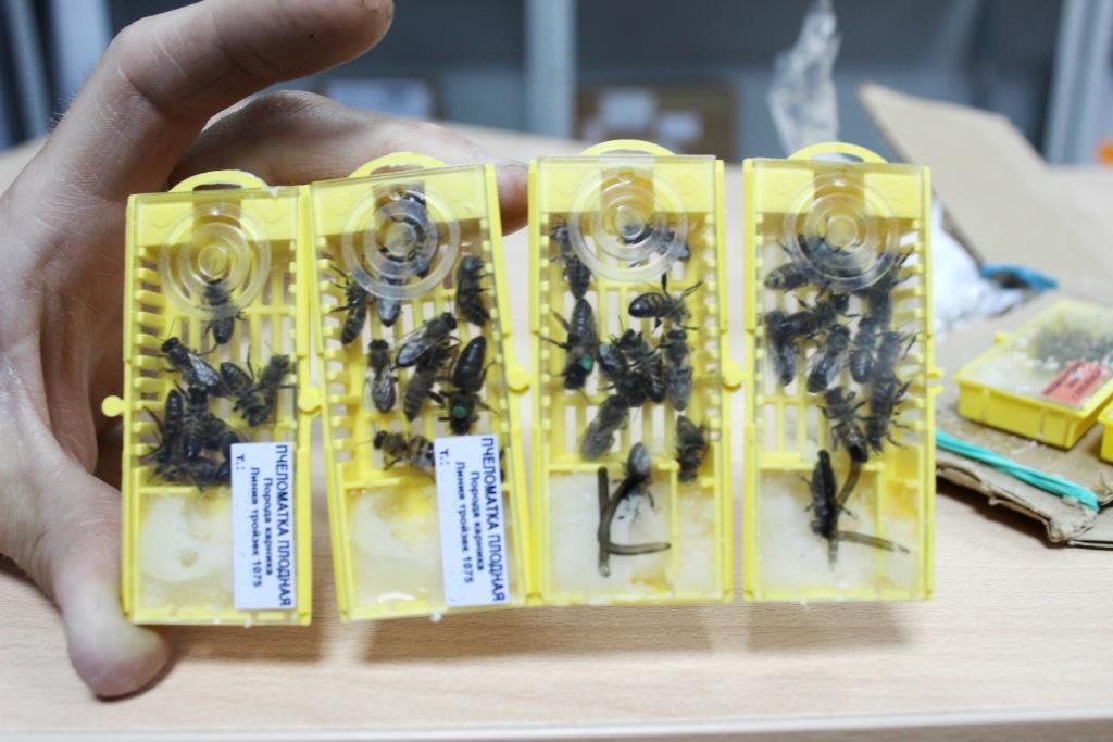 Курьерская служба Почты России доставила в Челябинск необычный груз – посылку с пчелами от одной