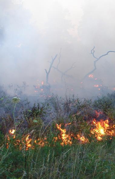 В Челябинской области благодаря системе спутникового мониторинга термоточек 99,5% лесных пожаров