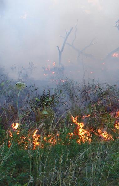 В Челябинской области с первого мая 2020 года введен особый противопожарный режим.  Соот