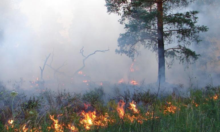 Уровень пожарной опасности на территории ряда муниципалитетов Челябинской области достиг чрезвыча