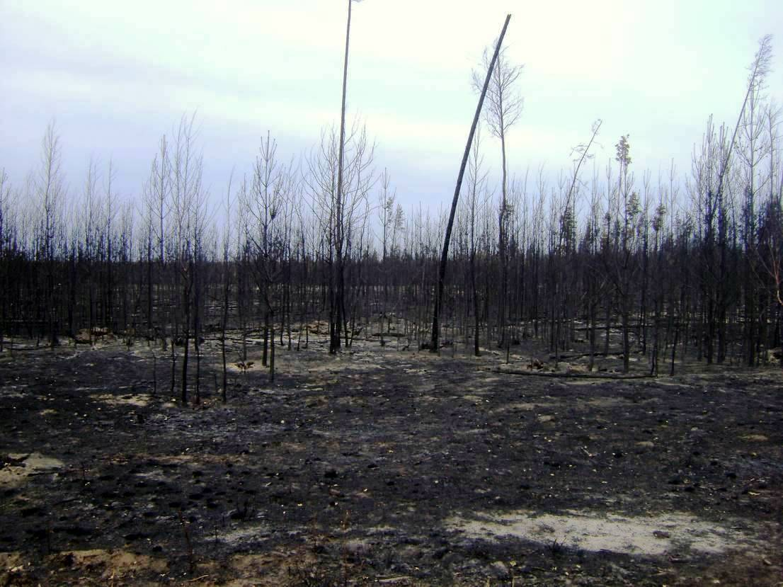 В середине июля нынешнего года в Санарском бору (Пластовский и Троицкий районы, Челябинская облас
