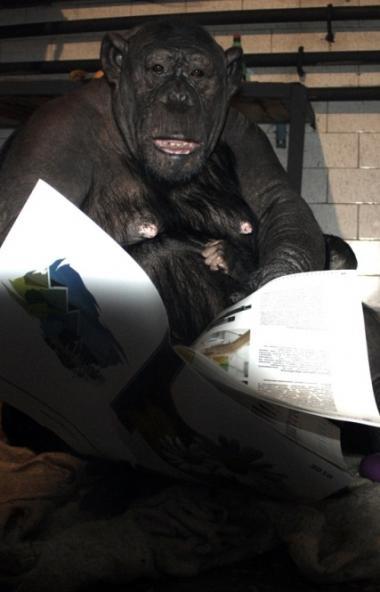С третьего ноября зал с приматами в зоопарке Челябинска будет закрыт для посещения в связис