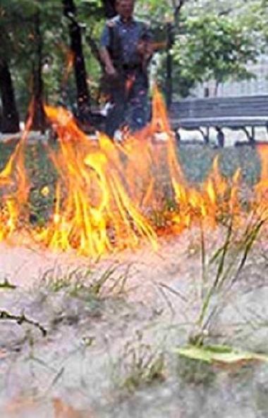 В Челябинске, как и других территориях региона, из-за тополиного пуха начались возгорания. Устано