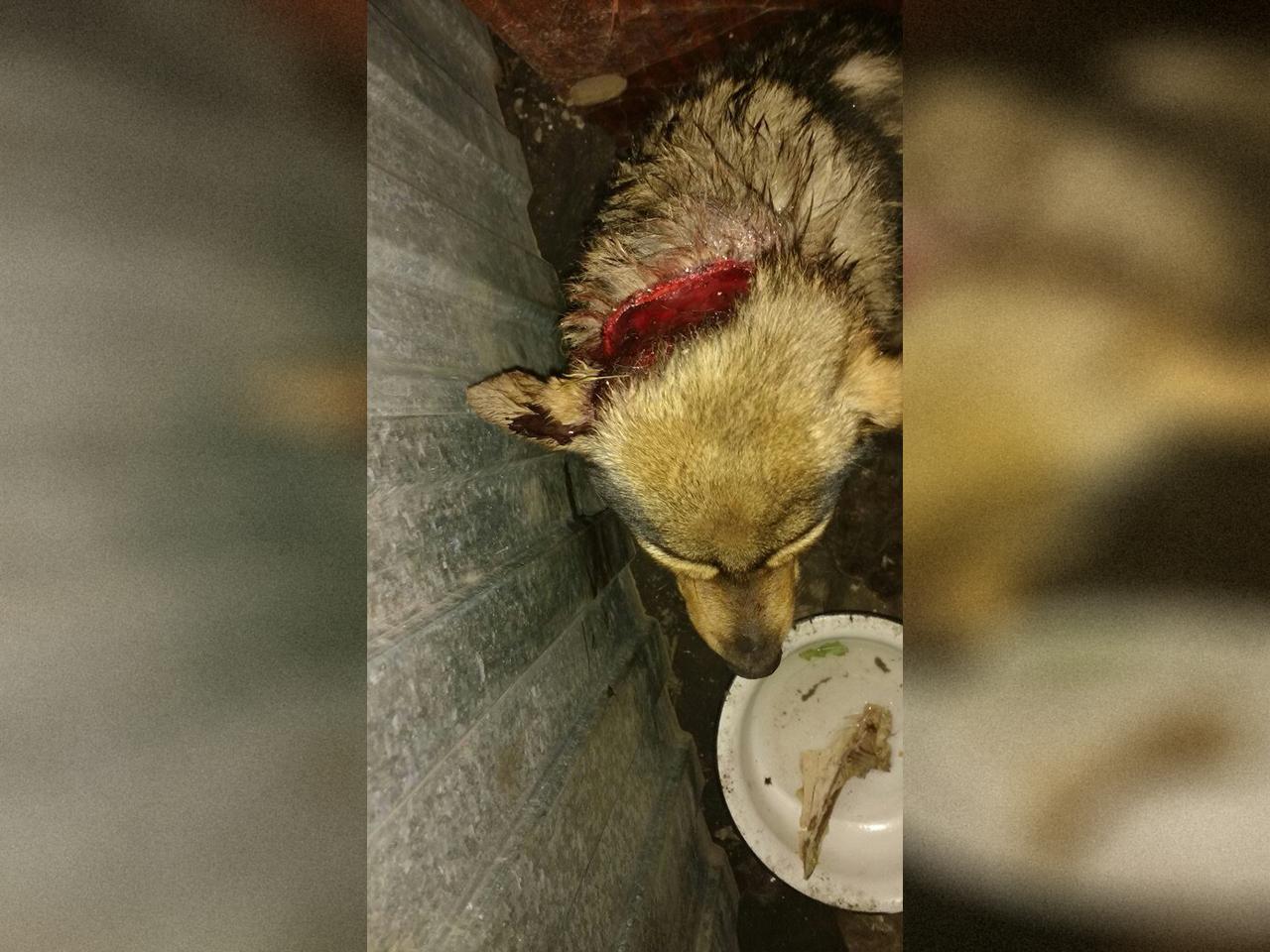 Об очередном случае жестокого обращения с животными в Чебаркульском районе написала в социальных