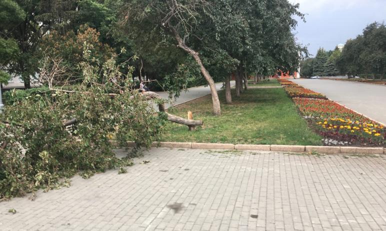 В Челябинске на аллее Славы - в той ее части, что за музыкальной школой, - стало на одну яблоню м