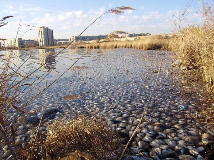 Население городов увеличивается и, следовательно, увеличивается потребление водных ресурсов рек,