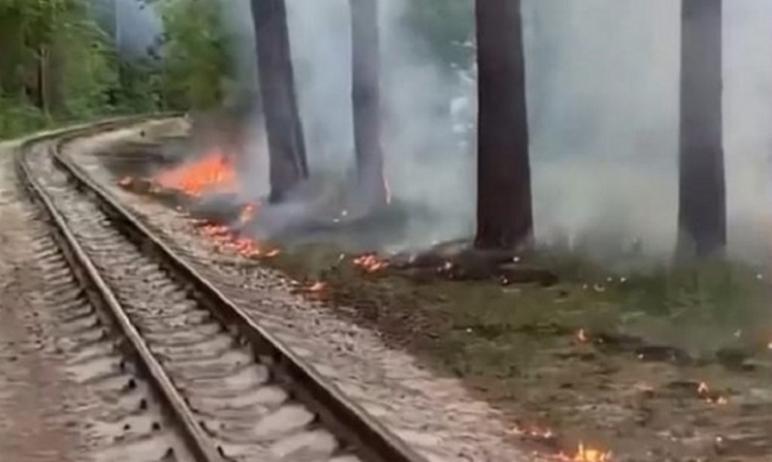 В Челябинске вредители специально поджигают тополиный пух, хотя власти неоднократно просили жител