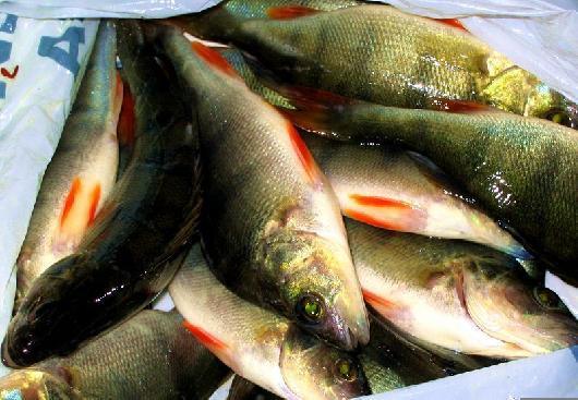На пункте пропуска «Бугристое» было задержано девять тонн рыбных пресервов и 16 тонн сливочного м