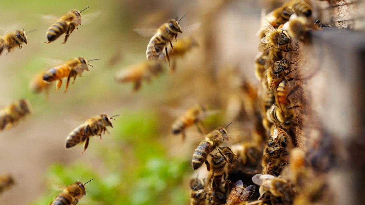 Магазин «Прииск» в Челябинске атаковали пчелы. Видео нашествия насекомых снял один из пользовател