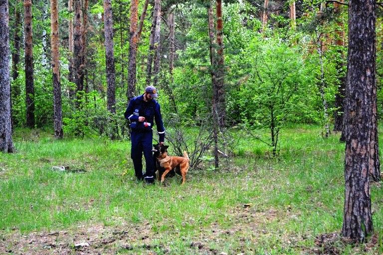 В миасскую службу спасения поступил вызов в лесной массив в районе коллективного сада «Солнечная